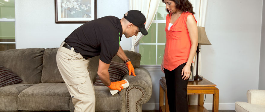 Williamsport, PA carpet upholstery cleaning